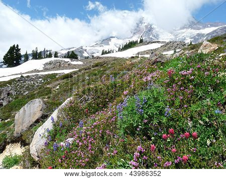 Alpine Scene on Mount Rainier