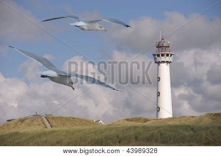 Light House With Seagulls