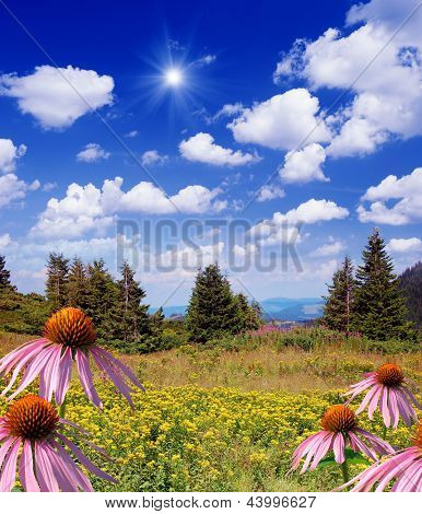 Summer landscape in the mountains. Echinacea flowers