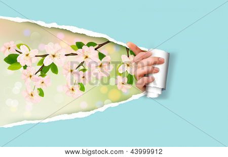 Nature background with with blossoming tree brunch with spring flowers and ripped paper. Raster version of vector