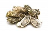 pic of mollusca  - raw opened oysters on a white background - JPG