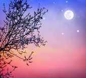 stock photo of moon-flower  - Beautiful blooming tree over dark night sky background - JPG