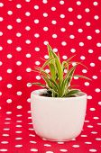 image of dessin  - Green plant on white pot with red speckles background - JPG