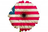 Gerbera Daisy Flower In Colors National Flag Of Liberia   On White Background As Concept And Symbol