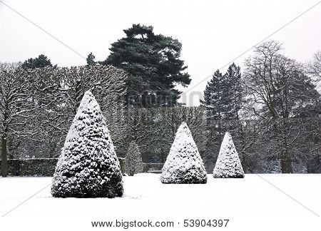 Yews cut in cone covered with snow, a park in winter (France)