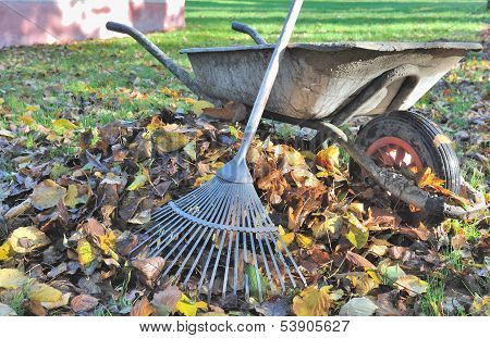 Collecting Leaves In Garden