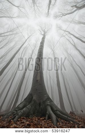 Tree in forest with fog from up looking perspective