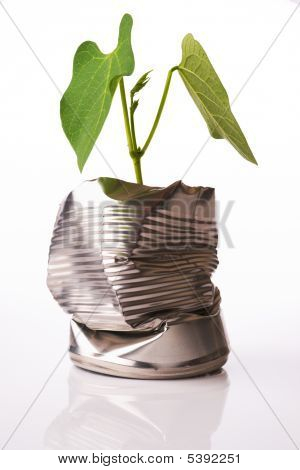 Green Recycling Concept Plant Growing Out Of Tin Can