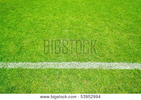 Green Grass With Line