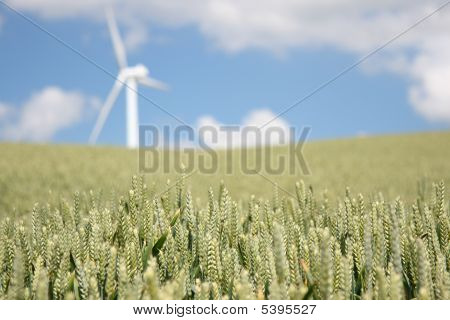 Wheat And Wind Turbine