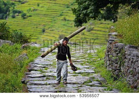 A Gurung man carrying a bamboo tree