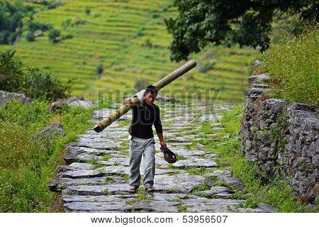 A Gurung man carrying a bamboo tree