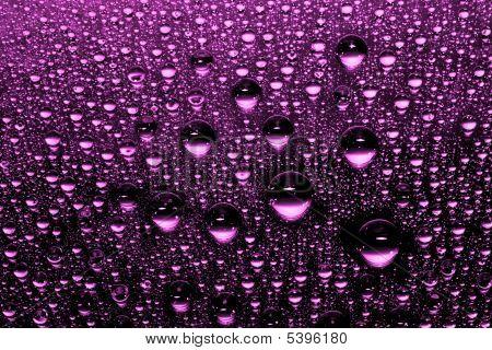 macro of purple water drops