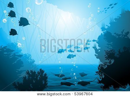 underwater world, oceanic fishes