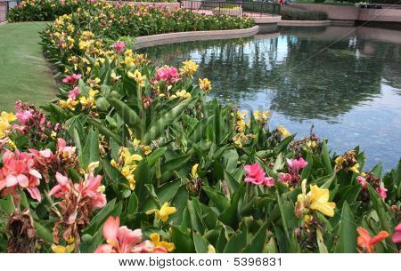 Flowers By A Lake