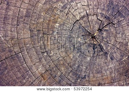 Cut Of Old Dry Tree