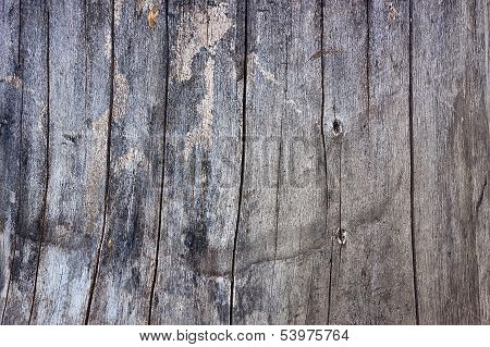 Wood Gray Texture