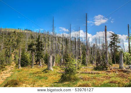 . Waldsterben