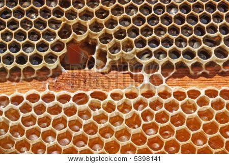 Beer Honeycombs