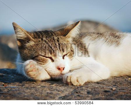 Cute yard cat