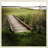 Wooden boardwalk leading into wetland