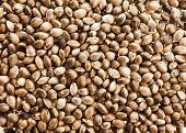 stock photo of cannabis  - Cannabis Hemp seeds close up surface top view background - JPG