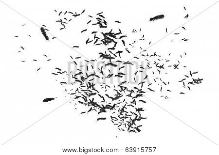 Digitally generated many feathers blowing in the breeze