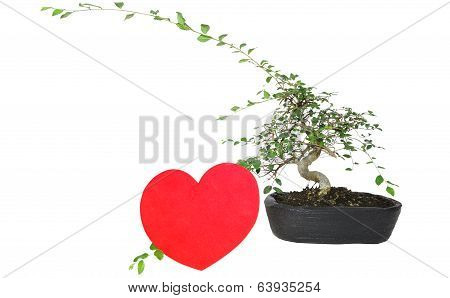 Bonsai With Heart