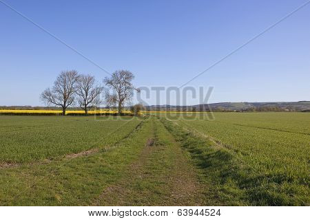 Agricultural Yorkshire