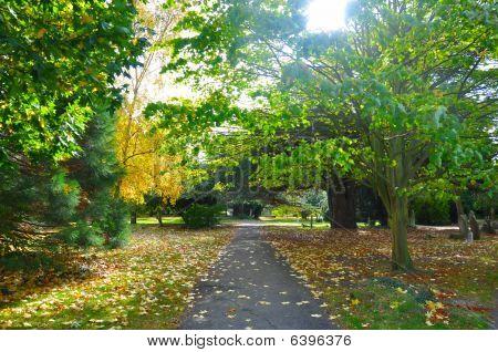 Sunlit Graveyard