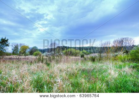 Reed Landscape In Usedom