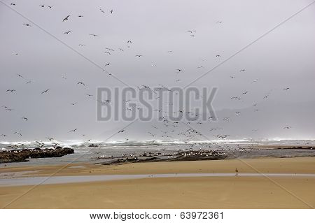 Flocks Of Seagulls Flying Along The Coastal Sand Beach