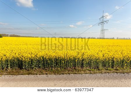Rapeseed Whit Electric Poles