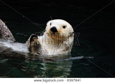White Otter