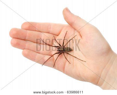 Spider On The Children Hand
