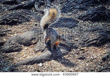 Squirrel at Chapultepec at Mexico City