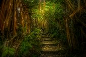 stock photo of greenery  - Path throught the jungle in northern Sumatra, Indonesia