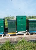 stock photo of bee keeping  - Swarming bees around the entrances of the hives - JPG