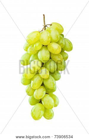Ripe Green Grapes Hanging Against White