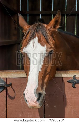 Horse in Stable Stall