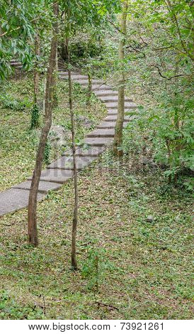 Stone Sidewalk In Forest