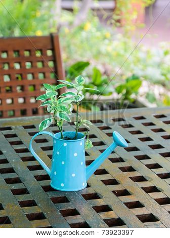 Watering Can Plant On Table