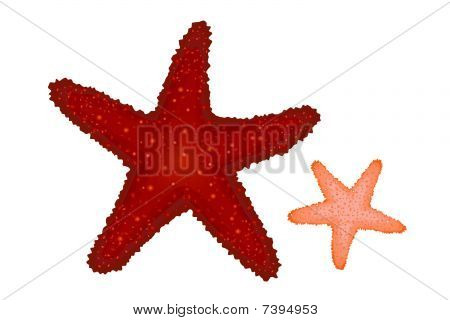 Red and Coral Starfishes