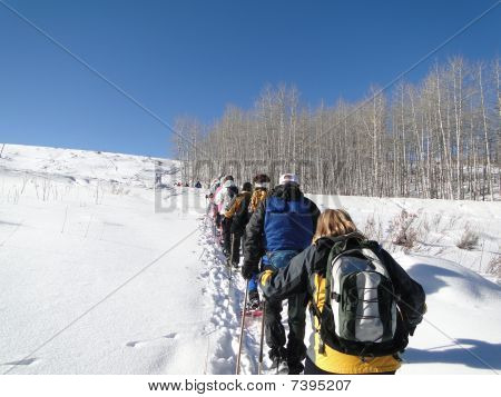 Large Group Of Snowshoe Hikers