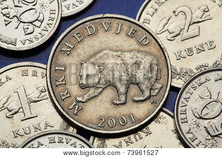 Coins of Croatia. Brown bear (Ursus arctos) depicted in the Croatian five kuna coin.