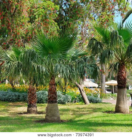 Tropical Garden With Palm Trees And Lawn