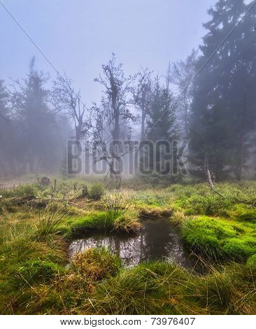 lake in a forest meadow