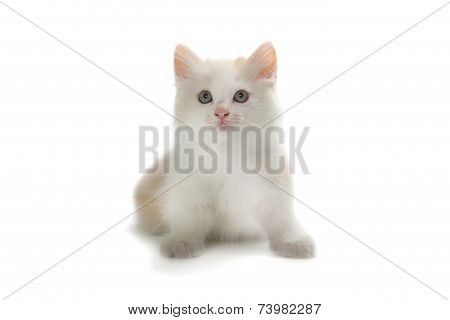 Little Kitten Isolated Over White Background