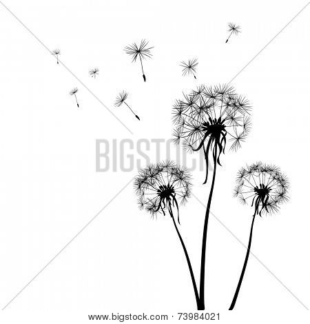 silhouettes of three dandelions in the wind; illustration