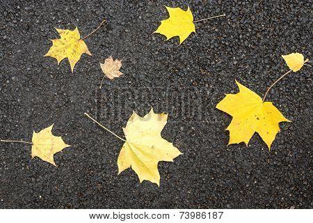 Maple Leaves On Asphalt